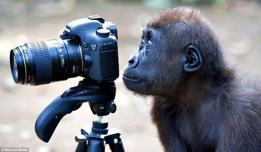 imparare a fotografare gratis